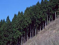 chiikizai1